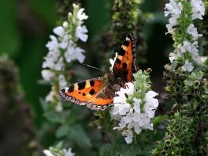 butterfly-199115_1280 (1)