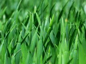 grass-383284_1280 (1)