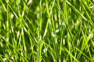 plant-855684_1280