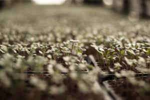 vegetable-plot-794571_1920