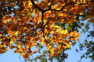 fall-foliage-209219_1920