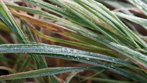grass-76065_1280