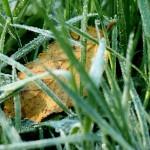 grass-545153_1280