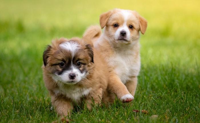 Cause e rimedi contro la pip dei cani sul prato blog - Eliminare odore pipi cane giardino ...