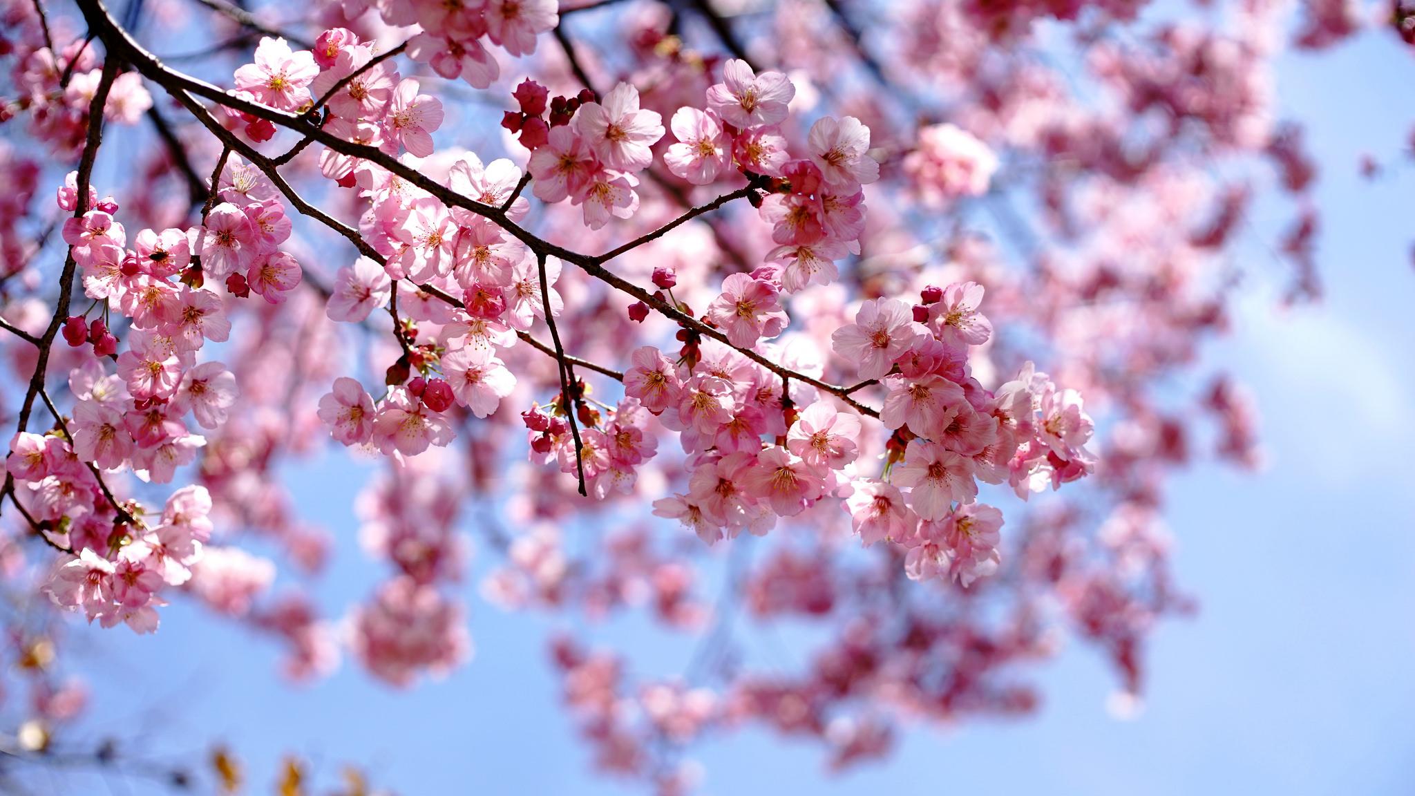 Gli alberi profumati saper scegliere quelli giusti blog - Alberi condominiali in giardini privati ...