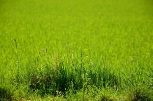grass-1341390_1920