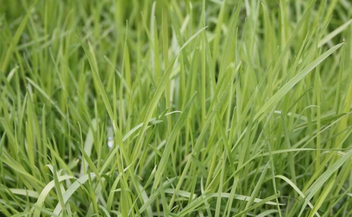 grass-1335526_1280