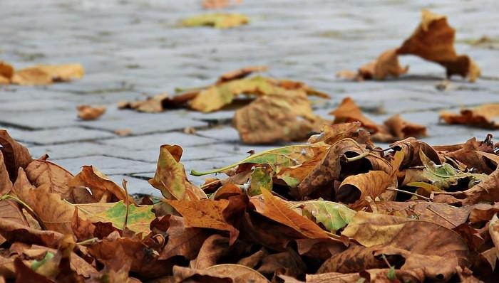 autumn-1685924_1280