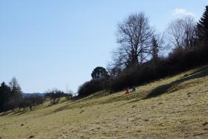 slope-695852_1920