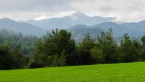 meadow-1937074_1280