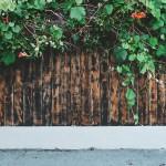 wall-768824_1280