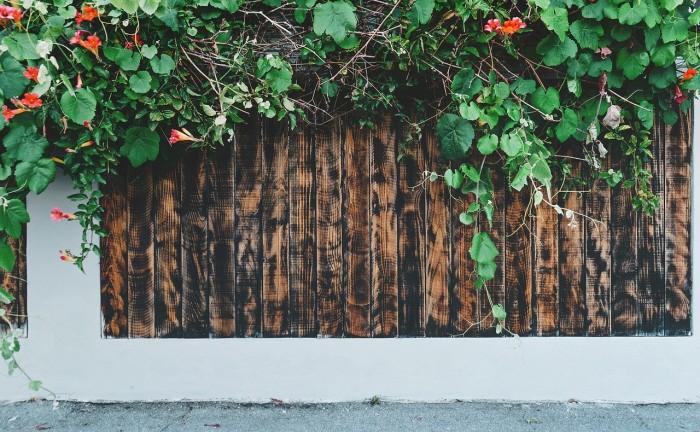 Guida Alle Piante Rampicanti Per Le Zone D Ombra Blog Green Service