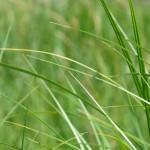 grass-653619_1920