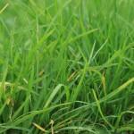 lawns-316079_1280