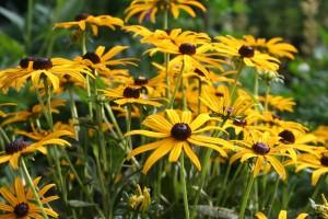 flower-1051988_1280