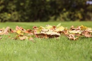 leaves-935669_1280