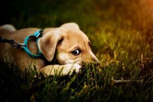 dog-2393078_1280
