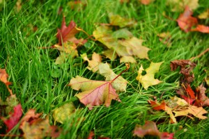 fall-leaves-2795542_1280