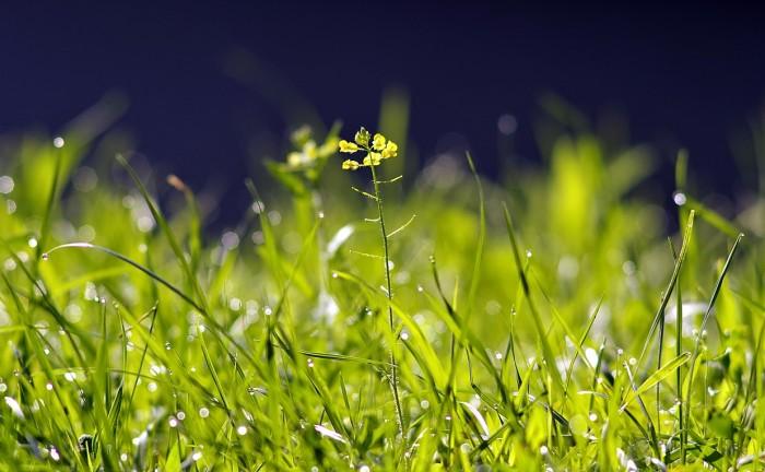 grass-2513787_1280