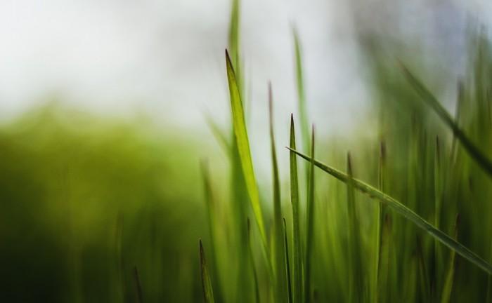grass-1369914_1920