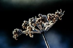 flower-522511_1920