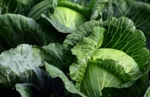 white-cabbage-2747316_1920