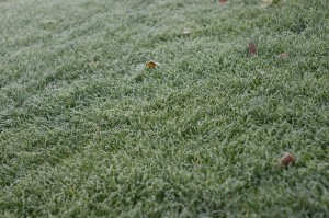 frost-1789500_1280