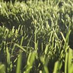 grass-530850_1280