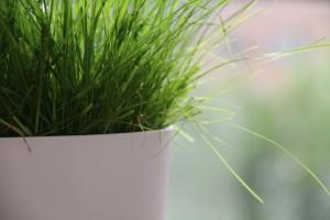flowerpot-367693_1280