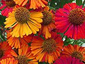 fall-flowers6